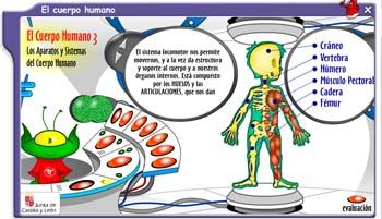 cuepo humano